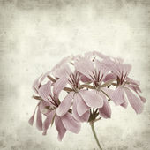 Textured old paper background with pink geranium — Stock Photo