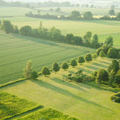 Tidy square - view over the early summer green fields from the air; East An — Stock Photo