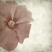Textured old paper background with red hibiscus — Stock Photo