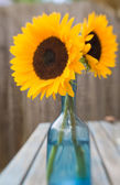 Two bright beautiful sunflowers in blue glass vase on garden table, set outside, cool fly-in lens efect — Stock Photo