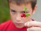 Little boy holding up a branch of lingonberry; — Stock Photo