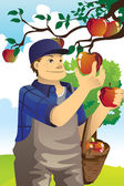 Apple farmer — Stock Vector
