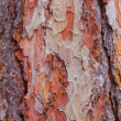 Texture of pine - Stock Photo