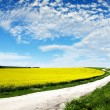Canola Field — Stock Photo #10108279