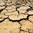Drought — Stock Photo #10108339
