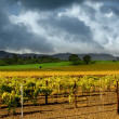 Autumn Vineyard Storm - Stock Photo