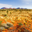 Stock Photo: The Olgas