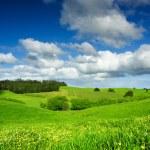 Green Field — Stock Photo #10108928