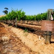 Barossa Vineyard — Stock Photo