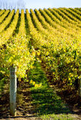 Rolling Vines — Stock Photo