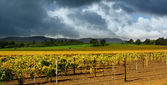 Autumn Vineyard Storm — Stock Photo