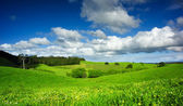 Campo verde — Stockfoto