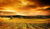 Stunning Vineyard — Stock Photo