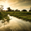 Wetlands — Stock Photo
