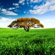 Stock Photo: Green Meadow