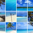 Tropical Montage III - Stock Photo