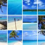 Tropical Montage III — Stock Photo