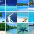 Tropical Montage — Stock Photo