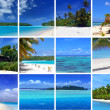 Tropical Montage - Foto Stock