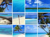 Tropical Montage III — Stock Photo