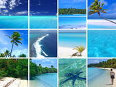 Tropical Montage — Stock Photo