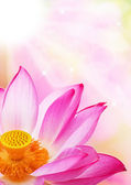 A close - up of a lotus flower — Stock Photo