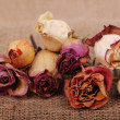 Dry rose bouquet with falling petals over canvas background — Stock Photo