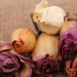 Dry roses texture — Stock Photo