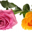 Pink and yellow roses — Stock Photo #8518832