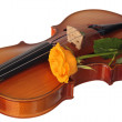 Yellow rose on violin — Stock Photo