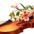 Violin and flowers — Stock Photo