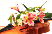 Flowers and violin — Stock Photo