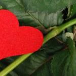 folhas de rosas com o símbolo do coração — Foto Stock