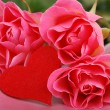 Three roses with heart symbol — Stock Photo #8605595