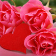 Three roses with heart symbol — Stock Photo