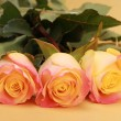 Three lovely roses — Stock Photo