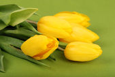 Yellow Tulips on Green background — Stock Photo