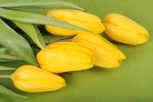 Spring yellow tulips — Stock Photo