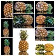 图库照片: Pineapple from all sides