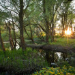 Beautiful riparian forest scenery on a lovely summer evening — Stockfoto