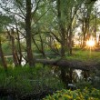 Beautiful riparian forest scenery on a lovely summer evening - Stock Photo