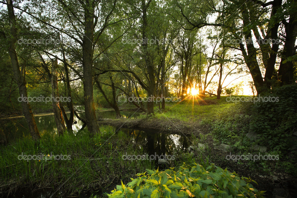 Beautiful riparian forest scenery on a lovely summer evening — Stock Photo #10408391