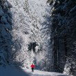 Cross-country skiing: young man cross-country skiing - Стоковая фотография