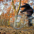 Bicycle riding in a city park on a lovely autumn/fall day - Foto Stock