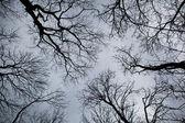 Treetops — Stock Photo