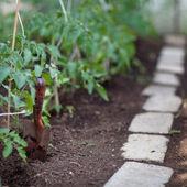 Ittle organic/bio/permaculture garden — Stock Photo