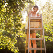 Young woman up on a ladder picking apples from an apple tree — Stock Photo #8520678