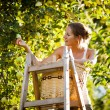 Young woman up on a ladder picking apples from an apple tree — Stock Photo