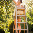 Young woman up on a ladder picking apples from an apple tree — Stock Photo #8520681