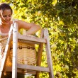 Young woman up on a ladder picking apples from an apple tree — Stock Photo #8520699